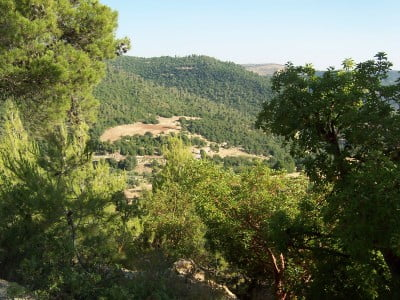 Bosque de Jordania