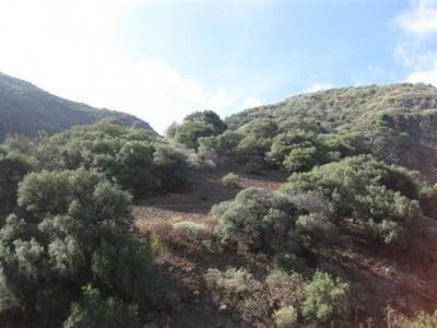 Bosques de Lomo Magullo
