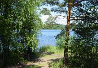Bosques Finlandia
