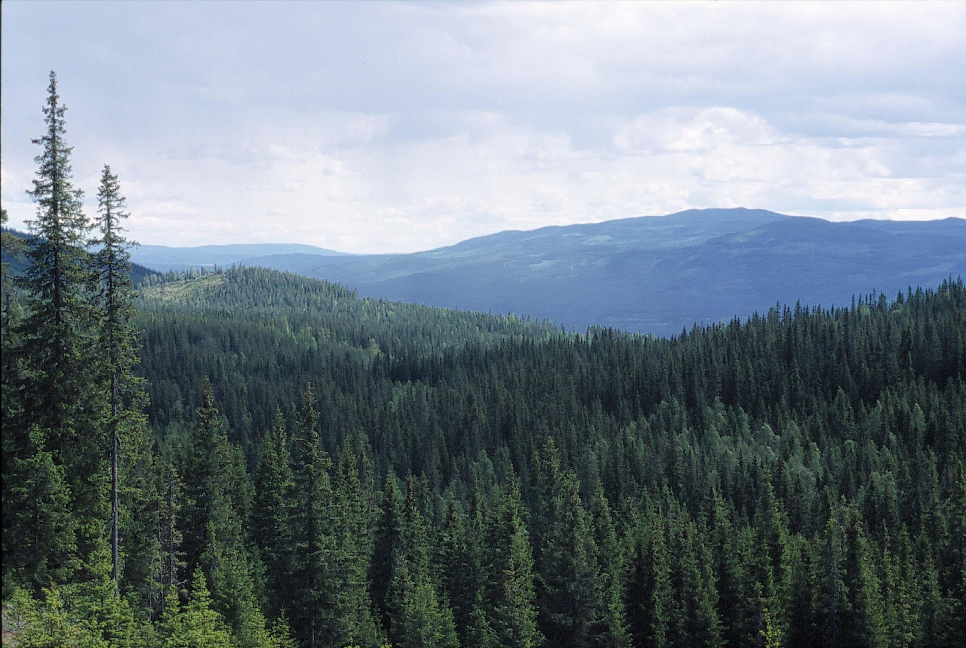 Bosques de Noruega