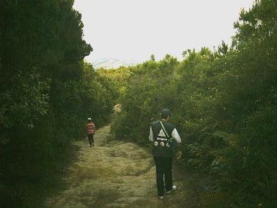 Caminata por  El Brezal de  Canarias