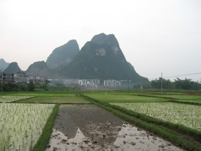 Gastronomía – China