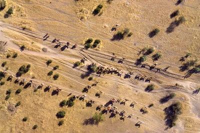 Chad, capital caravanan de camellos