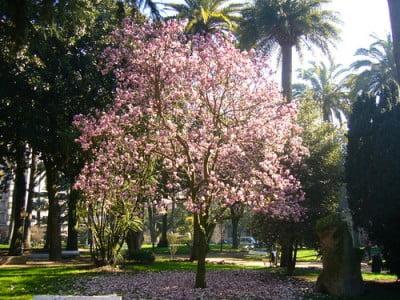 Clima de Pontevedra