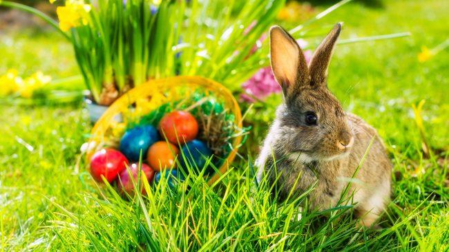 Conejo y huevos de Pascua: una costumbre alemana