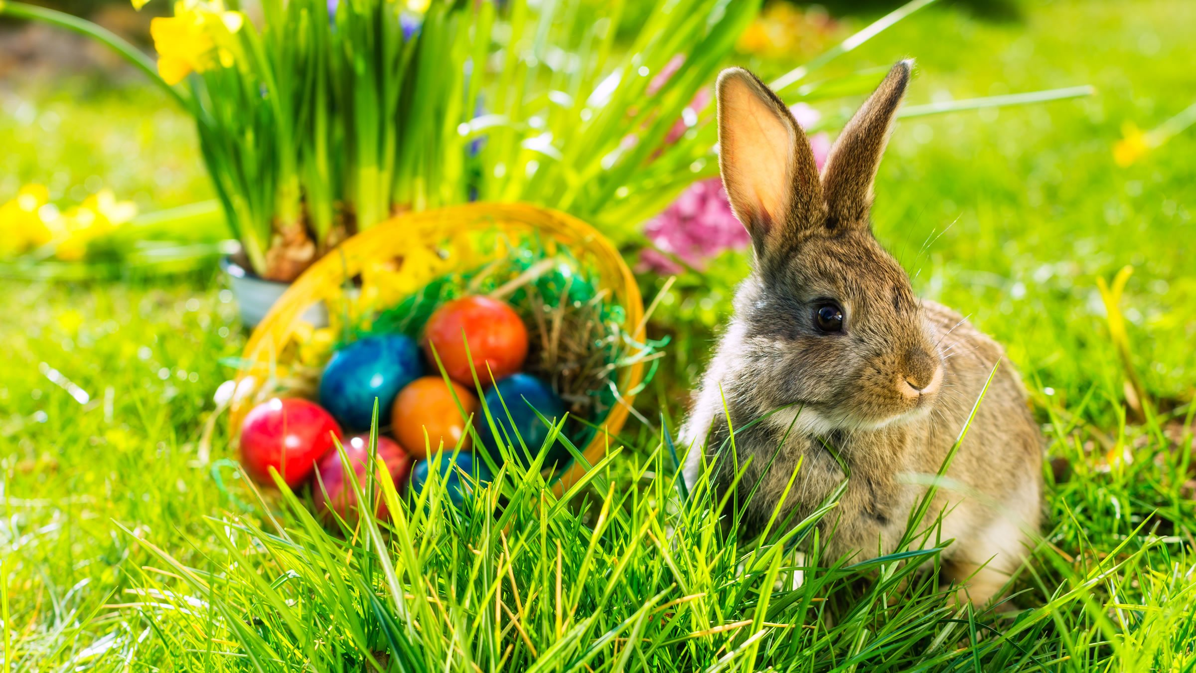 Conejo y huevos de pascua una costumbre alemana - Videos de huevos de pascua ...