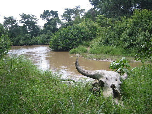 congo uganda