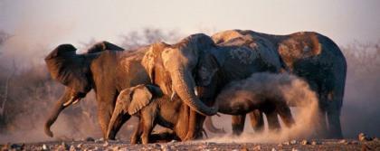Descubre Africa