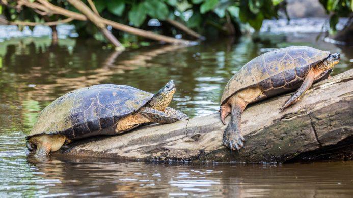 Ekoturismoa Tortuguero Parke Nazionalean, Costa Rican