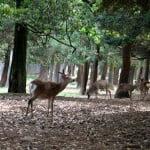 Ecoturismo en Nara