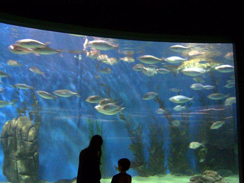El acuario de Melbourne