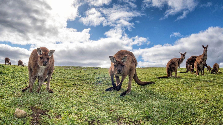 Consejos, documentación y requisitos para viajar a Australia
