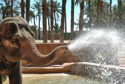 elche el safari