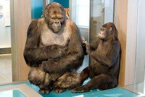 Exhibición de la Evolución en el Museo de Ciencias Naturales