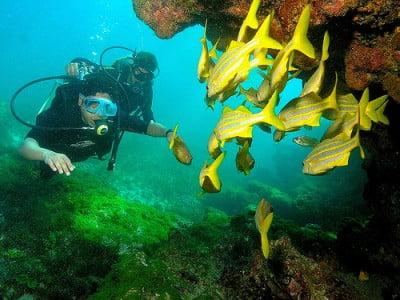 fauna marina brasileña