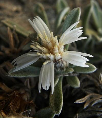 Flora de Arinaga
