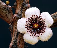 Flora de Madagascar