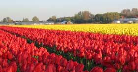 Paisajes de Holanda
