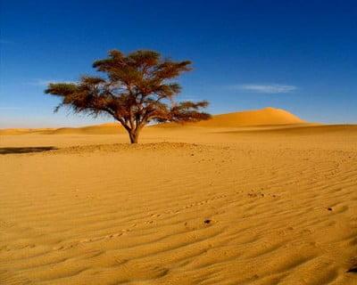 Foto del desierto africano