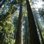 Foto del Parque Nacional Redwood