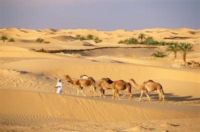 Fotos de Argelia, camellos en el desierto