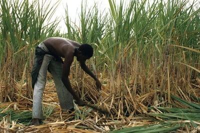 Fotos de Burkina Faso Cortando la caña de azúcar