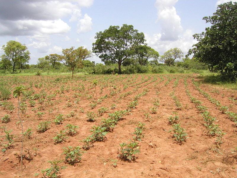 Fotos de Burkina Faso Reforestación en Tolotama