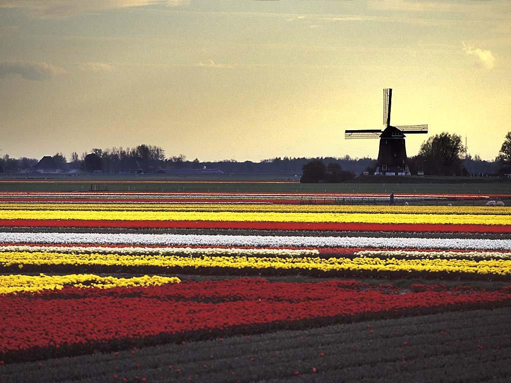 Fotografias de Holanda