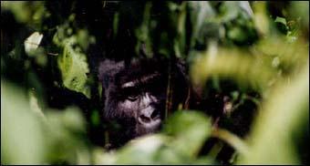 Fotos de Urganda