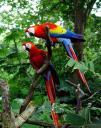 Fauna de Guacamayas de Costa Rica
