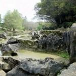 Imagen del Jardin Botanico de Cuba
