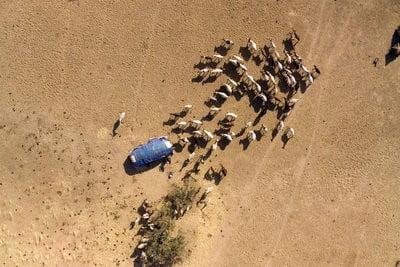 Imágenes de Chad campamento nómada y un pequeño rebaño de ganado en el centro de Chad