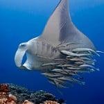 Imagenes de Submarinismo