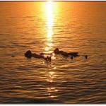 Viaje al Mar Muerto