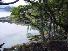 Imagenes Parque Nacional Tierra del Fuego