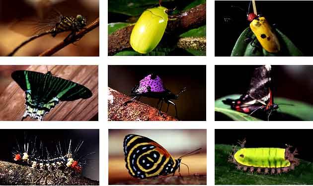 index_insectos