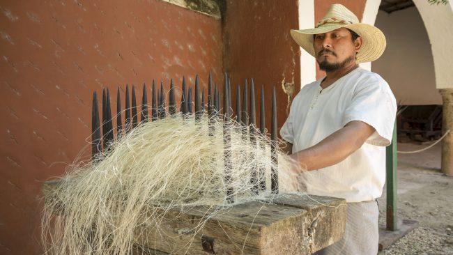 Traballador mexicano que procesa fibra de sisal