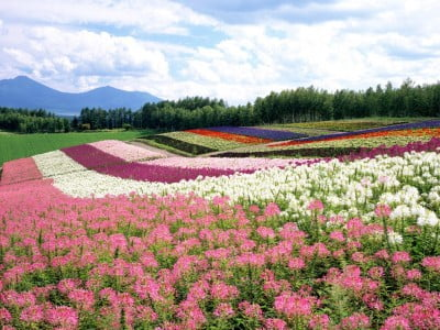 Isla de Hokkaido