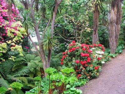Jardin botánico de Dunedin