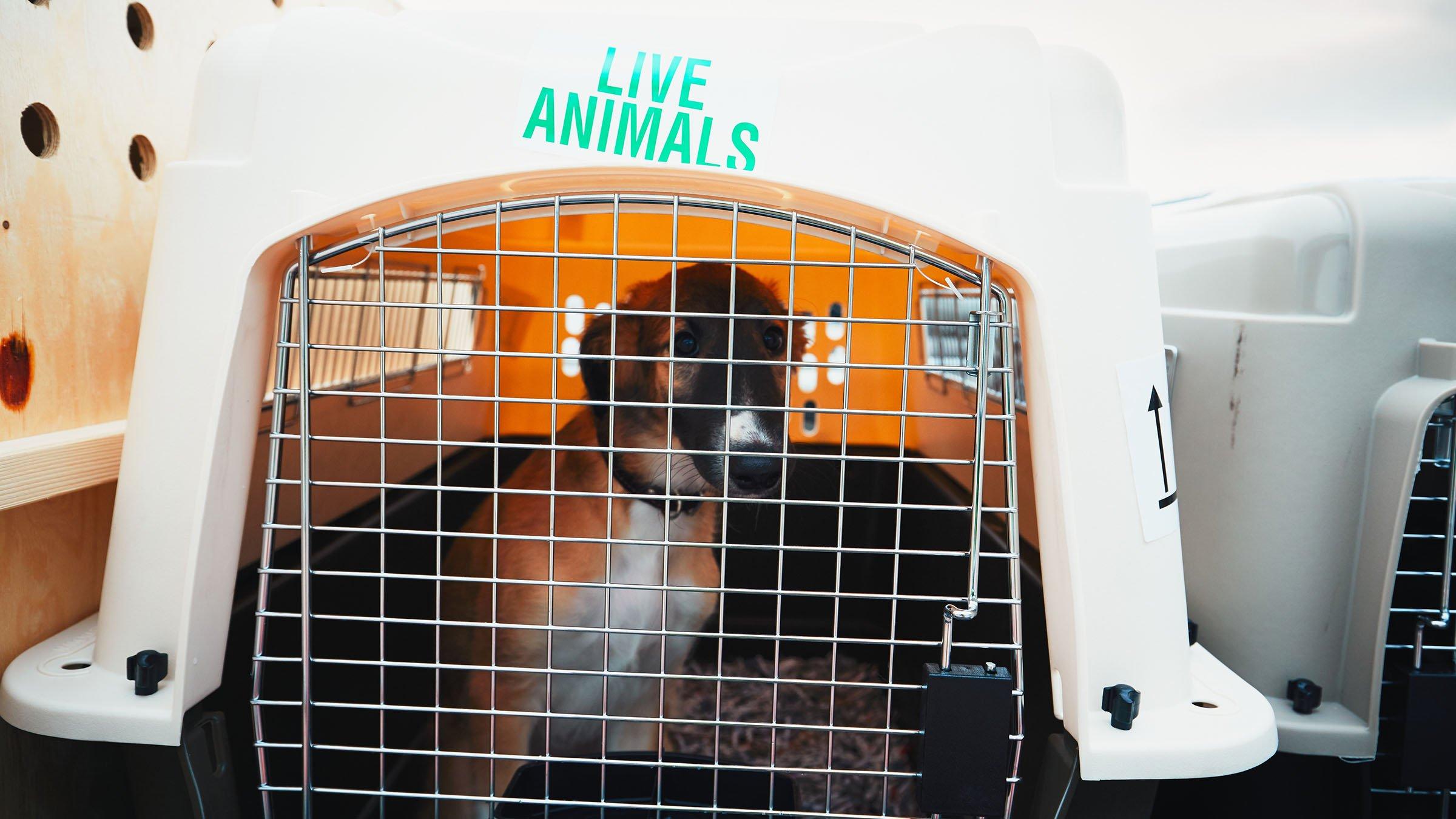 Jaula para perros en Avión