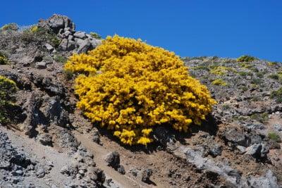 Las Cumbres – Gran Canaria