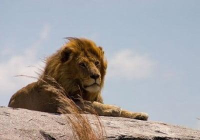 leon safari