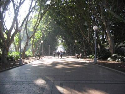 Los árboles de Hyde Park