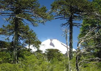 los volcanes más activos Llaima desde el parque