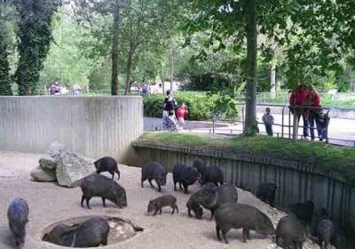 madrid-zoo