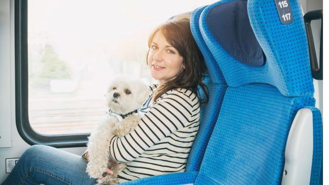 Requisitos para viajar con perro a Cuba