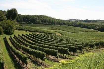 mejores bodegas de vino del mundo