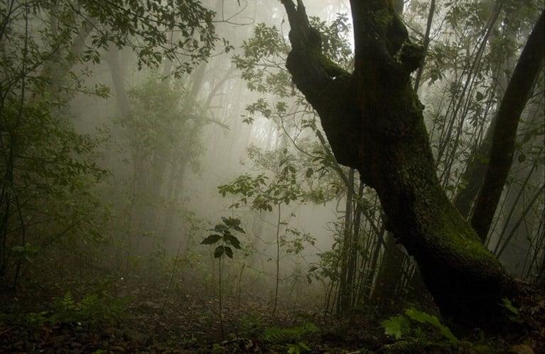 Monte verde de Los Silos