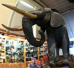 museo de historia natural elefante africano