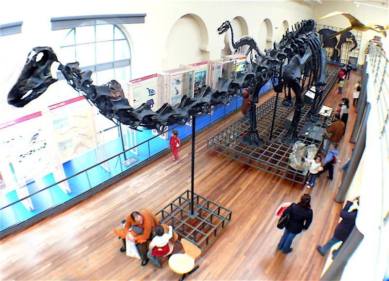 museo de historia natural fósiles